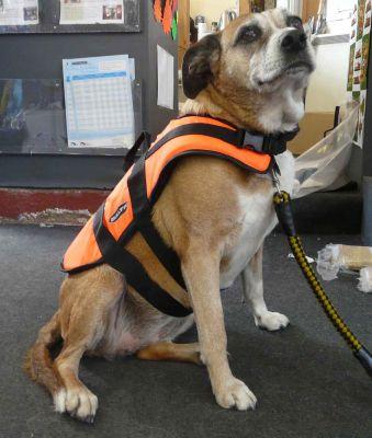Baltic Dog Life Jacket Extra Large Limekiln Chandlers